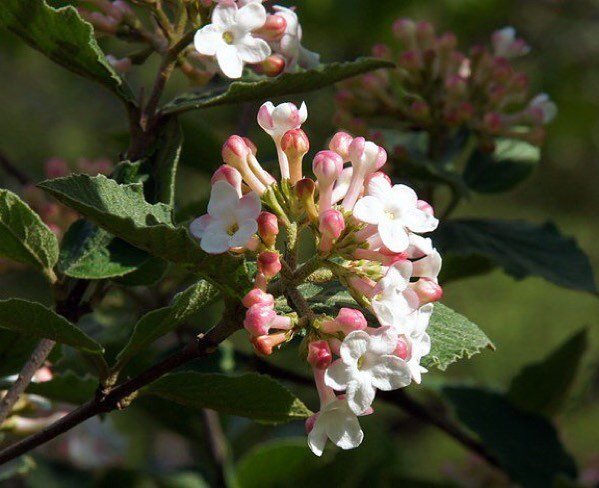 Gardendesignmag We Have A New Guide To The Best Flowering Shrubs