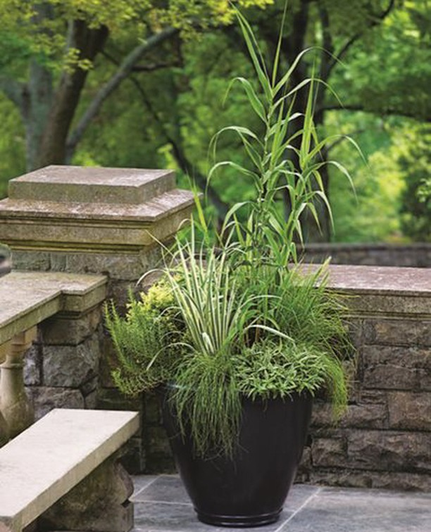 Garden Design Tip Use Gres As Container Plants Sticking To A Limited Color Palette With Focus On Varied Textures And Forms Can Be Eye Catching