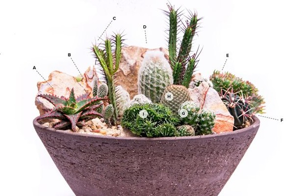 Learn how you can make this mini cactus garden in just 30 minutes, plus 11 other...