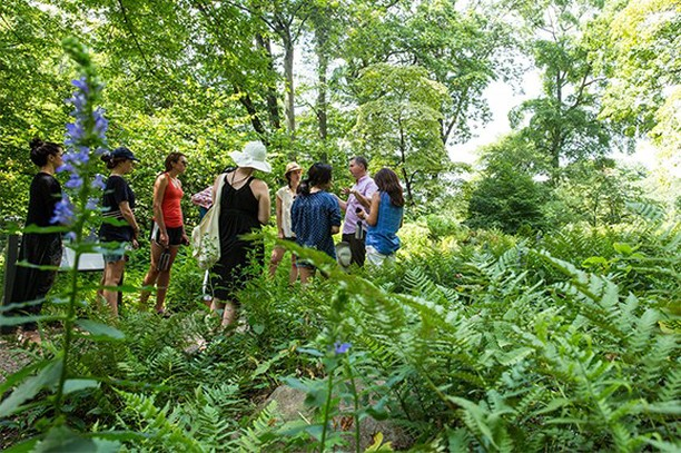 Take your plant know-how or #garden passion to the next level with a NYBG class ...