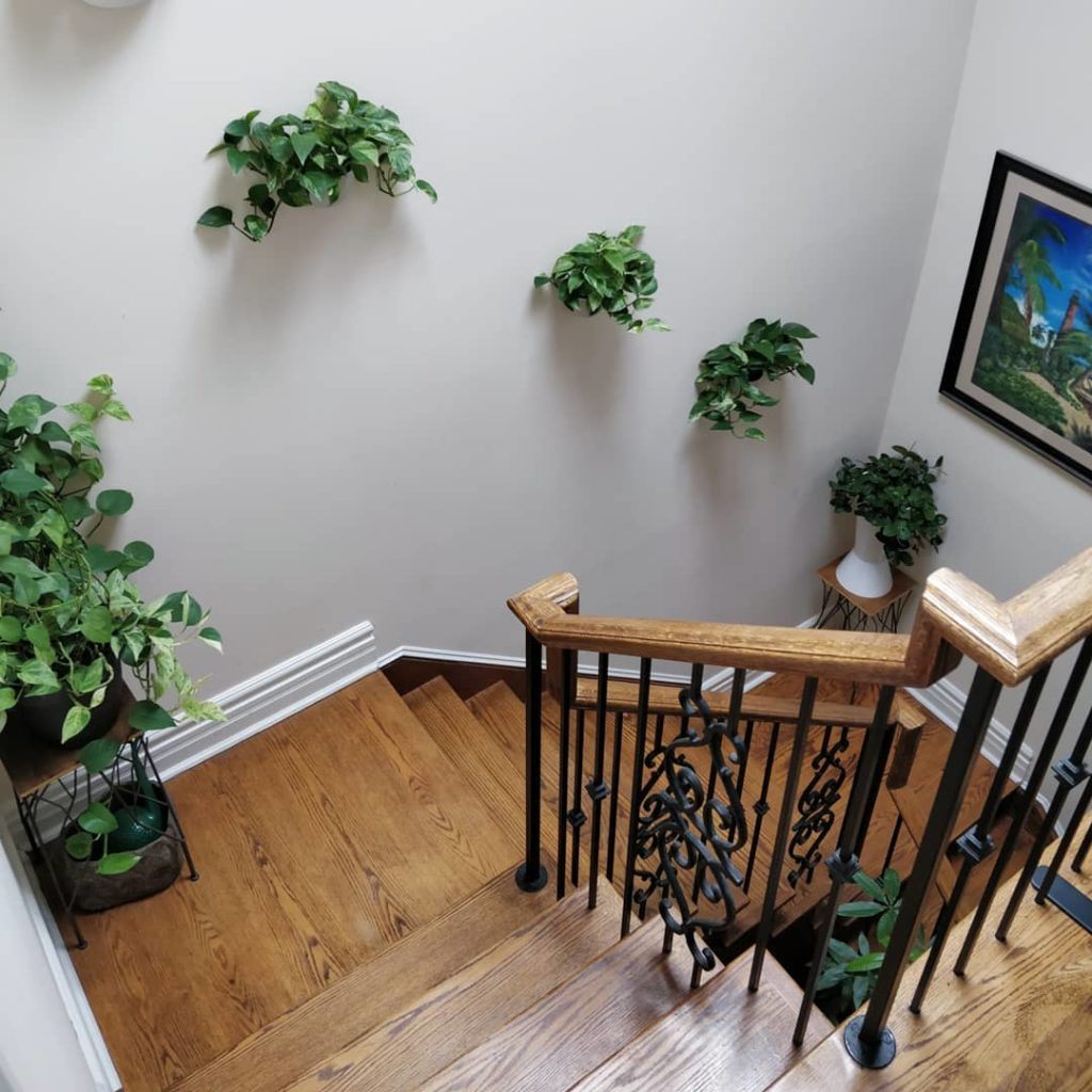 My approach to house plant care: - 1) Understand your conditions: the skylight i...