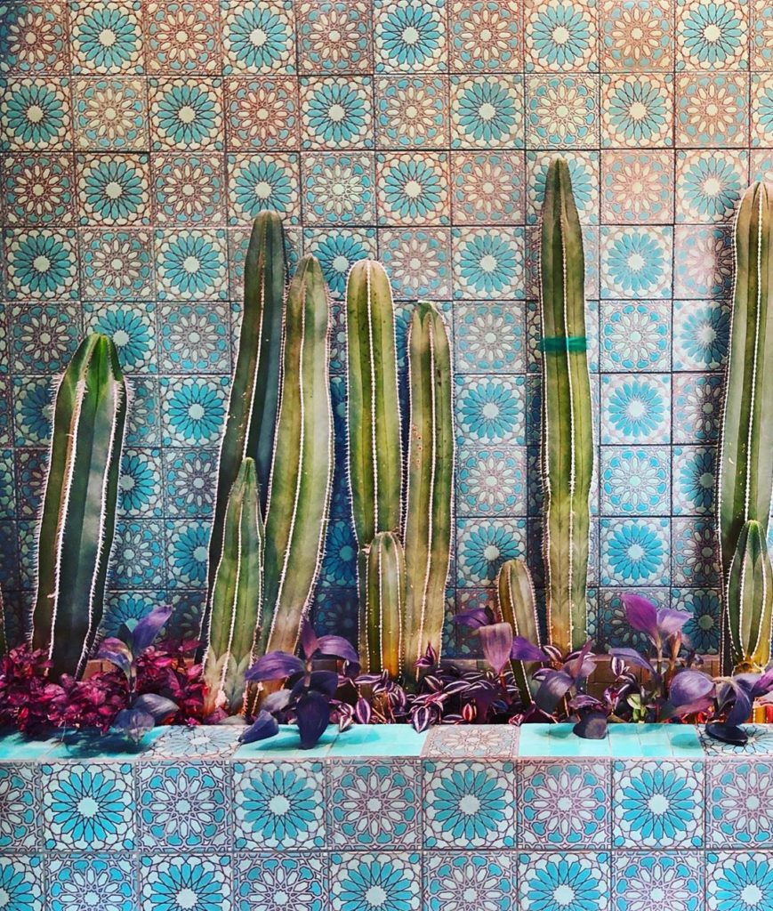 When tiles + cacti = magic!! Photo from friend and neighbor @rebeccaprus ...