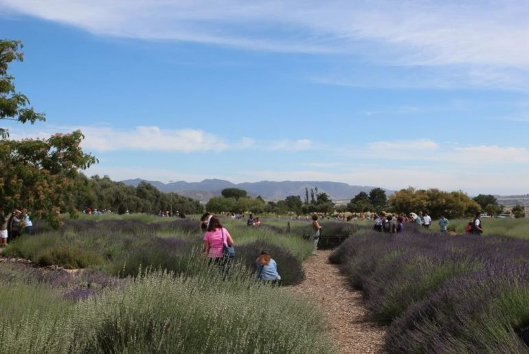 Can you smell the lavender from where you are? If you're in Southern California,...