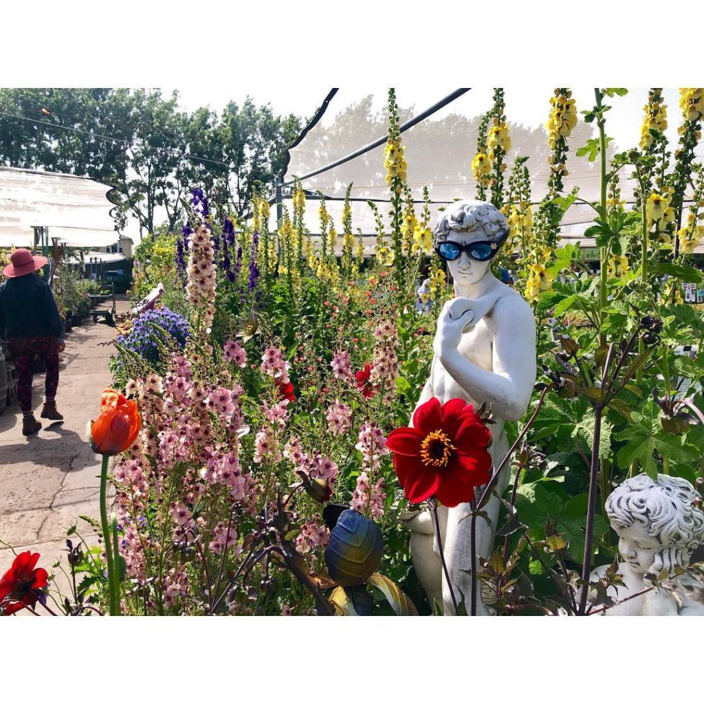 Annie, you're a stunner  first trip to @anniesannuals, and it was a floral fever...