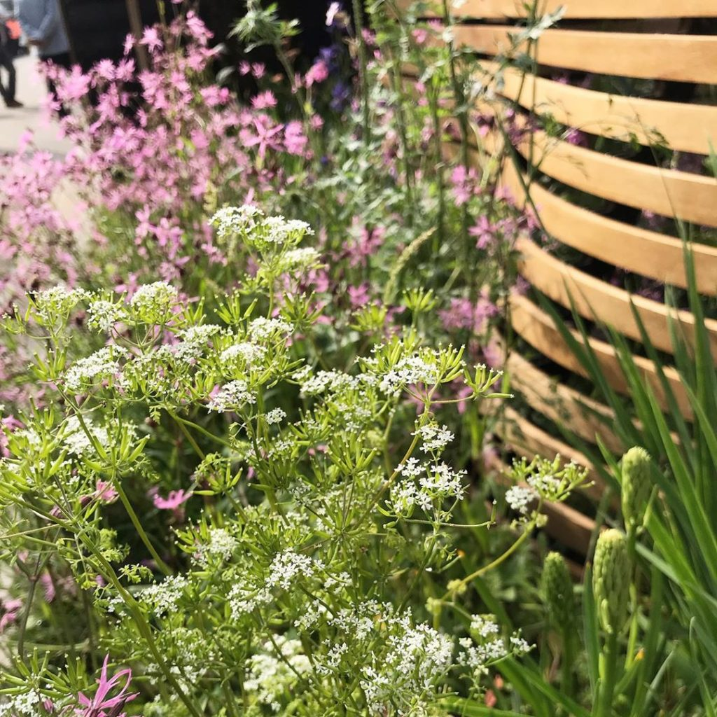 A Cornish verge in Chelsea @tomraffield @rhs_chelseaflowershow with thanks to @l...