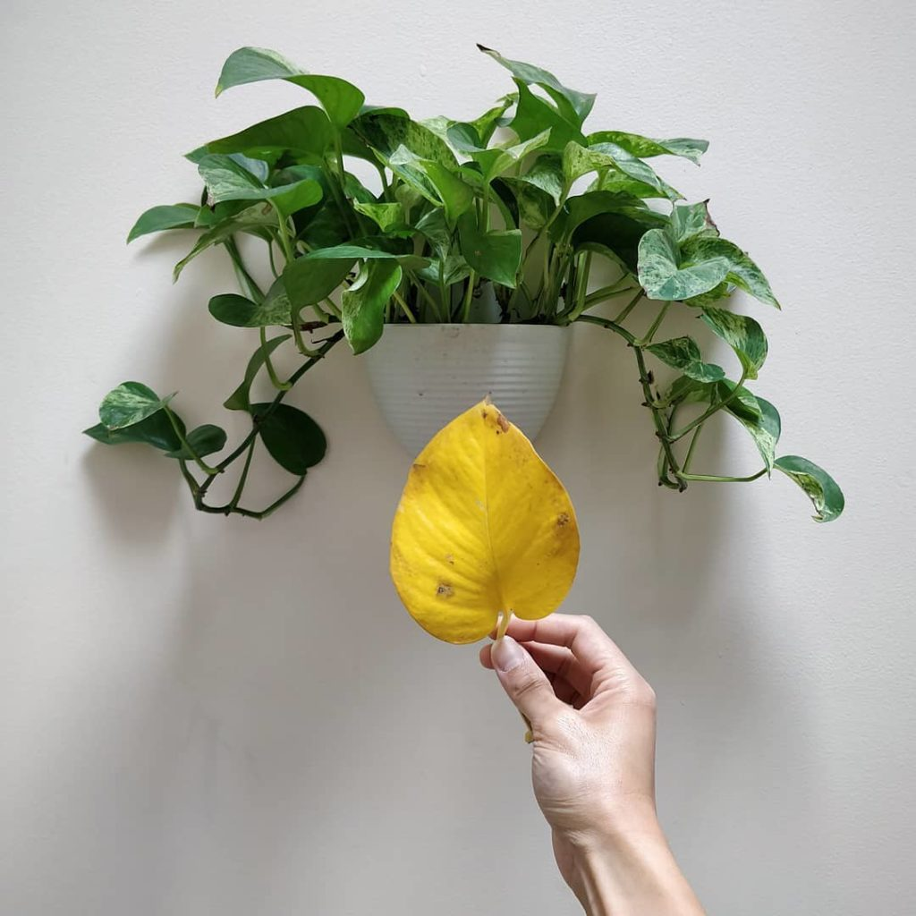 Houseplant care seems intimidating because if you *think* something is wrong, yo...