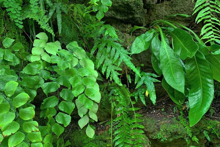We love ferns in all their crazy, jungalicious varieties! How many different fer...