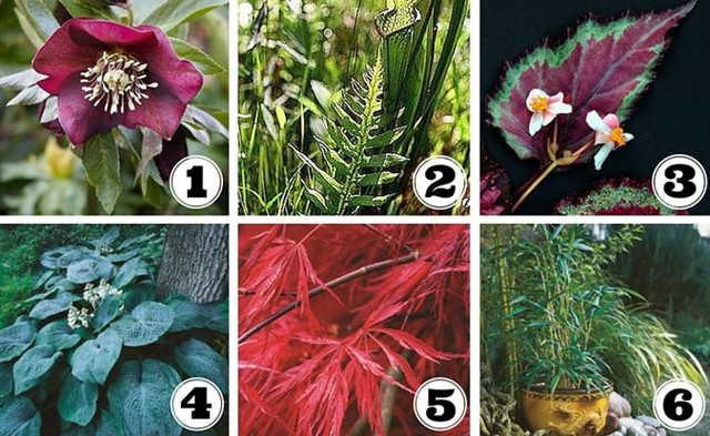 6 plants for shady container gardens: 1. HELLEBORES - early bloomers; partial sh...