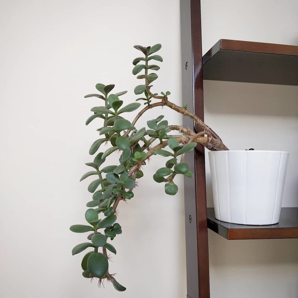 """Dear Jade plant, don't let anyone judge you with the """"e"""" word. I love that your ..."""