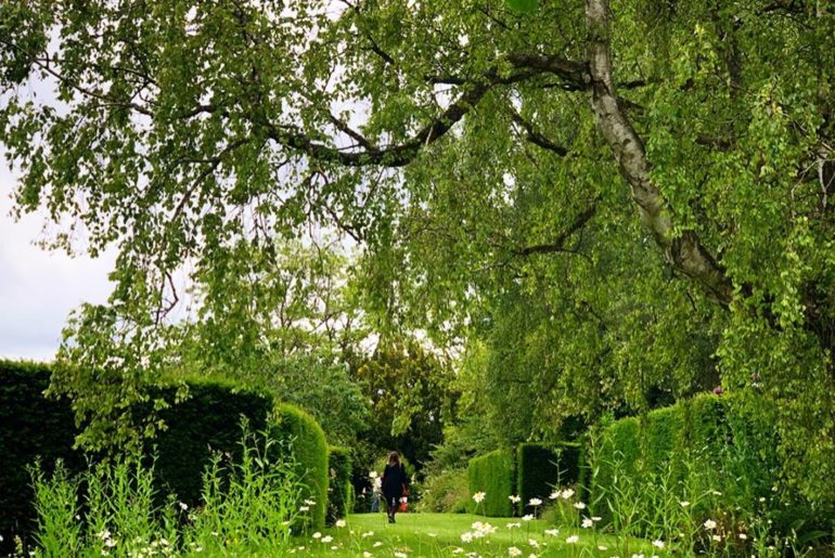 Beautiful Oxeye daisies and Yew walk at Asthall Manor. Such a wonderful place to...
