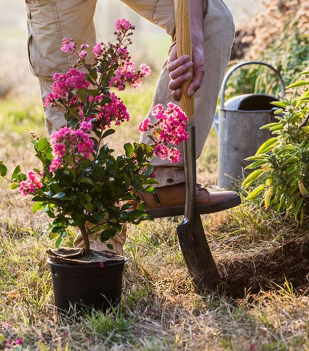 What's on your planting to-do list? . Crape myrtles are very resilient and can b...