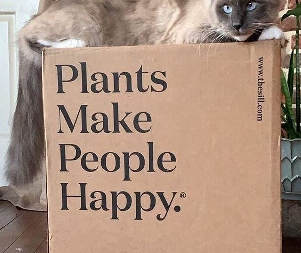 With each order of your plants, you'll receive your very own cat-friendly surfac...