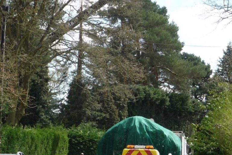 I thought you'd like to see the large Rhododendron shrub from my earlier post be...
