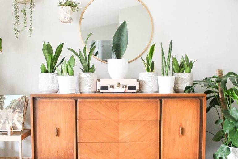 This snake plant setup is everything we've ever wanted.  @leafandlolo...