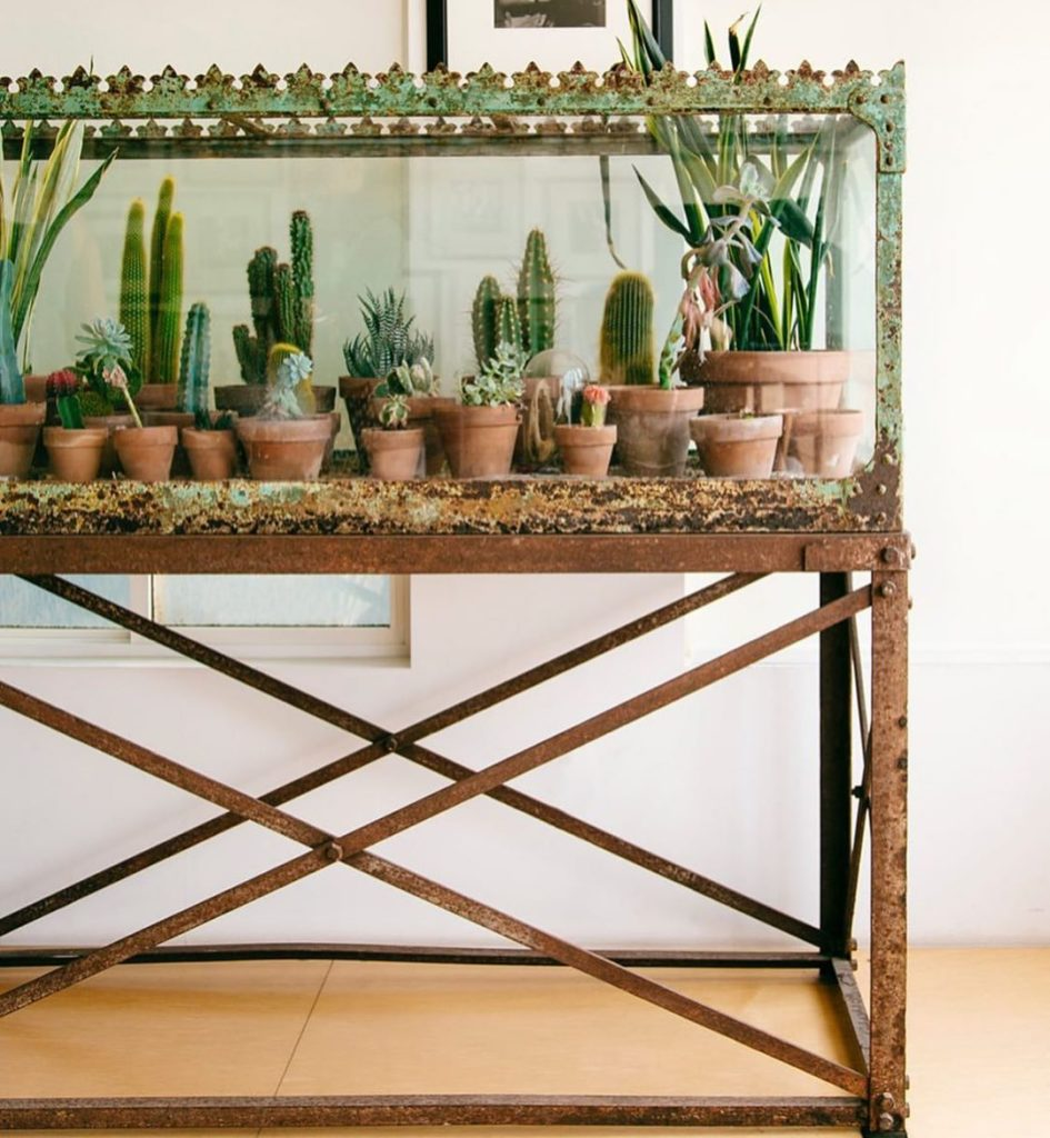 What are some fun ideas you've executed with planting succulents / Cacti? Comme...