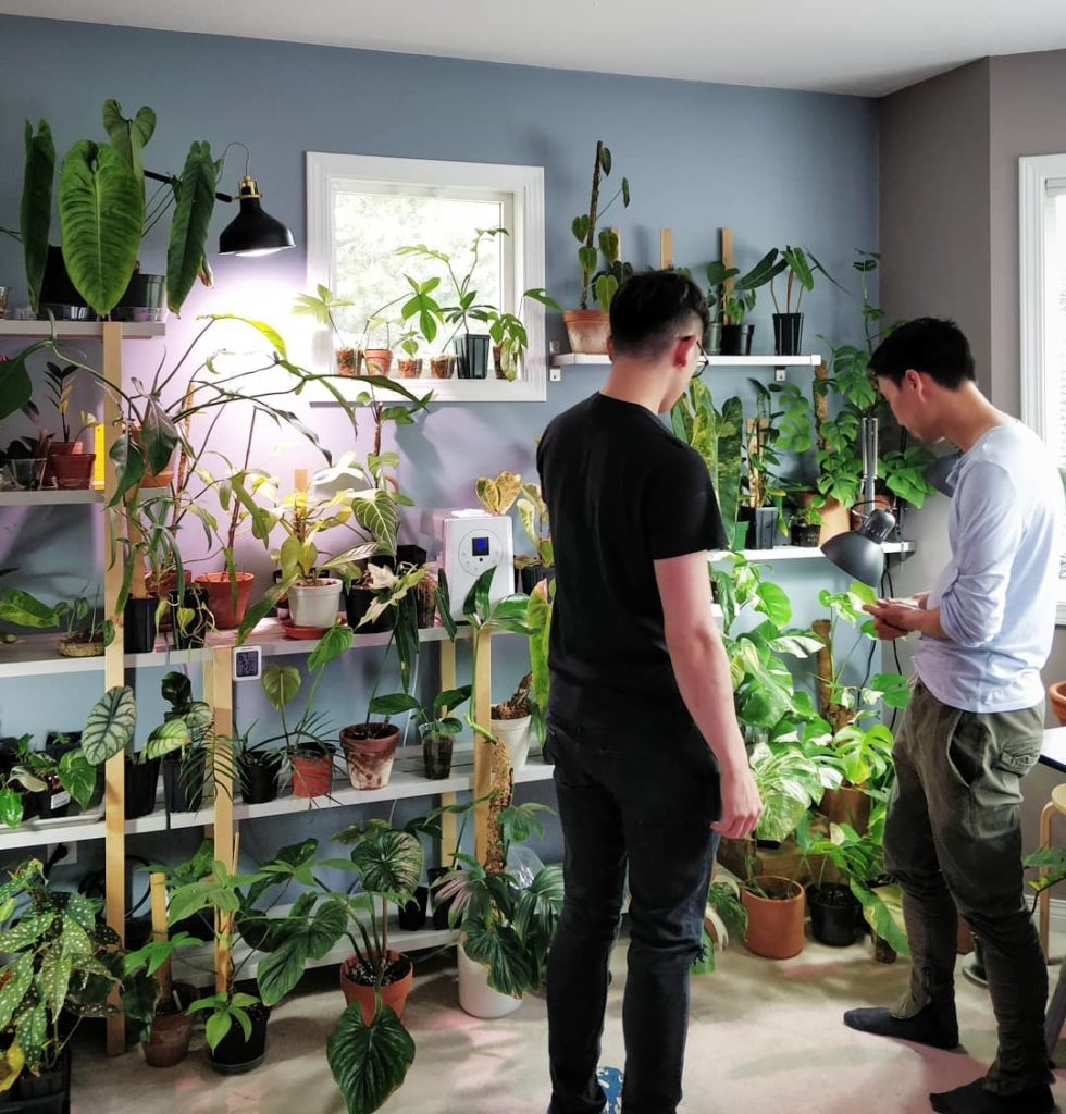 Got to visit the rare plant collection of @urban_greenroom - I'll be posting a f...