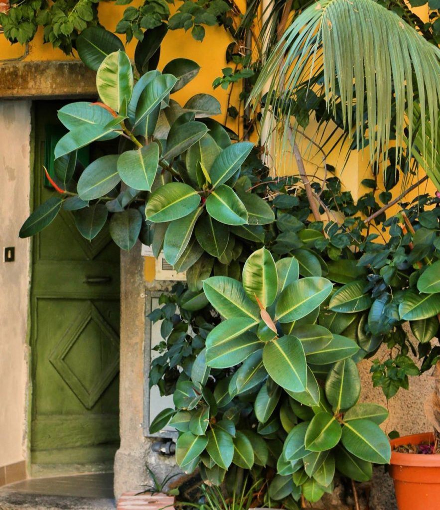 We can always get behind a DL green door and a lush and lovely rubber tree  #jun...