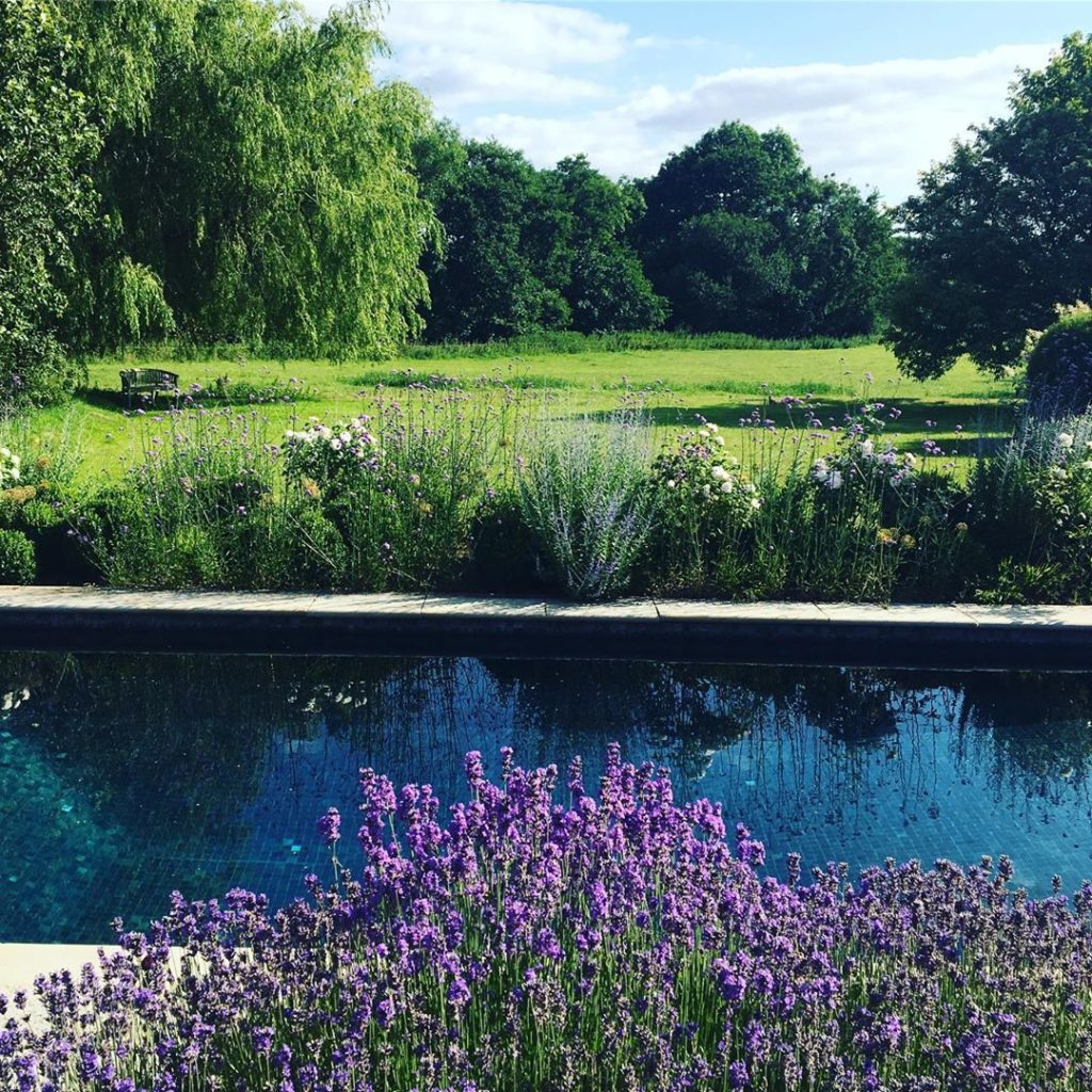 #lavender set off against deep blue #swimmingpool #countryside #landscapedesign ...