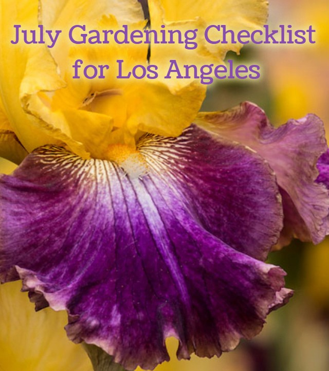 The best time to plant your bearded irises is now through September. What plans ...