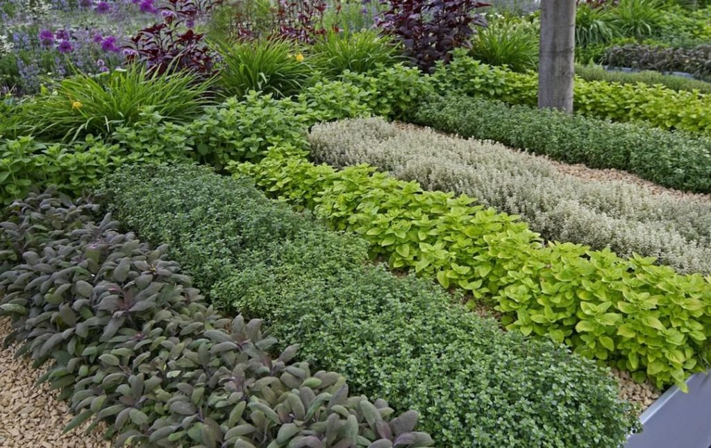 Herbs are delicacies of the summer garden. Are you growing any? . If you're gard...