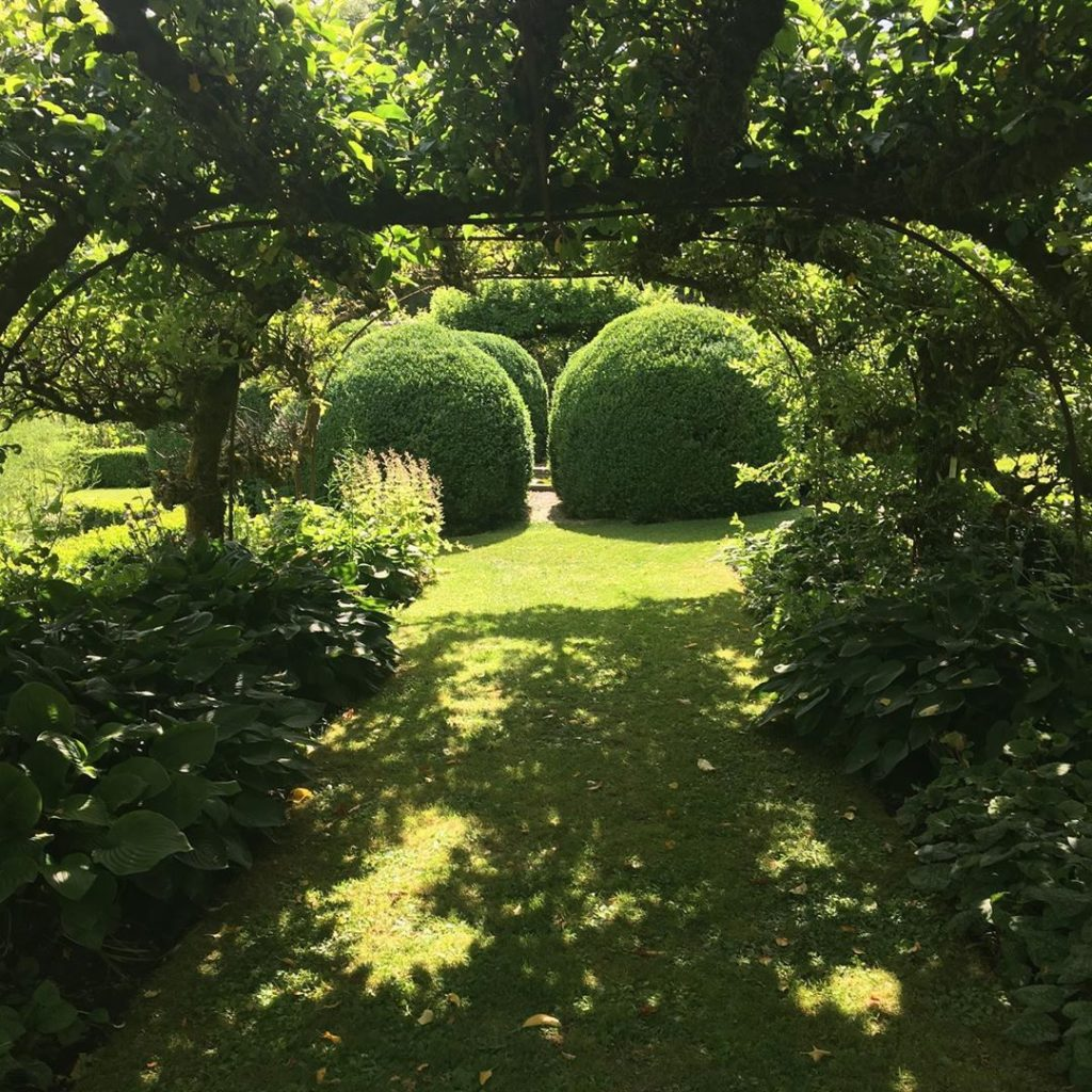 Giant #buxus globes and apple #arbour in the #walledgarden @healegardens #dapple...