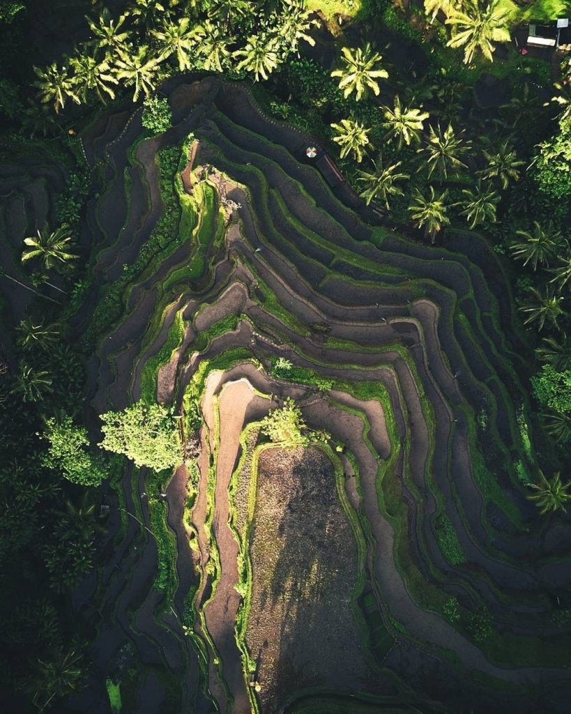 An aerial view of the Tegalalang rice terraces in Bali, Indonesia.  Incredible p...
