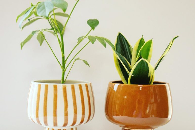 Overwatering is probably the #1 reason houseplants die, and that is largely due ...
