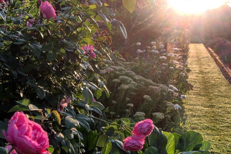 Early morning dew and light on the lawn and roses. Beautiful!...