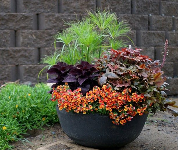 How are your plants holding up in the heat?  . Soil drying out, fertilizer runni...