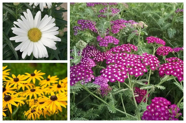 Have a passion for perennials? . In our newsletter this week we shared 18 popula...