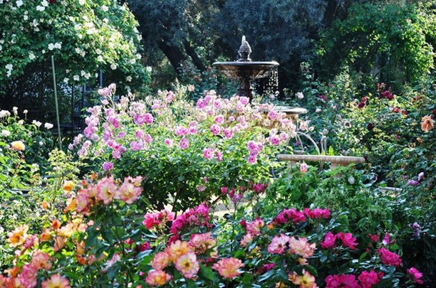 How do you say goodbye to your summer garden? . . Photo by Christopher Whelan . ...