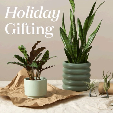 The holidays are right around the corner, and it's time to brighten up your offi...