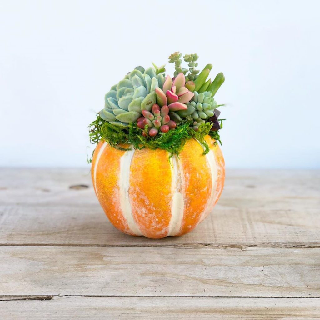 Succulent Pumpkins are now in stock on our site!!...