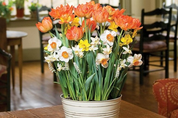 You might have started planting bulbs already, but you can keep planting bulbs t...