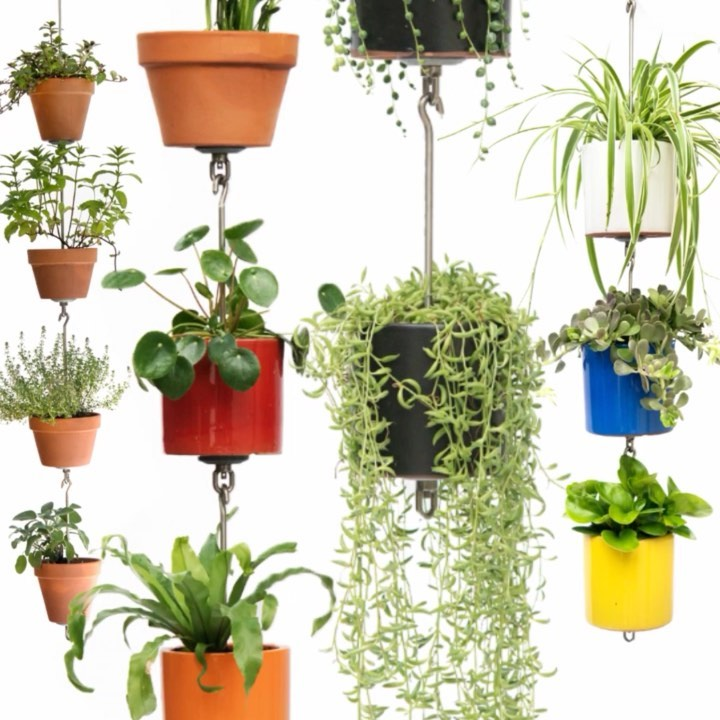 Friends, fellow gardeners, indoor and outdoor plant-obsessed colleagues — We are...