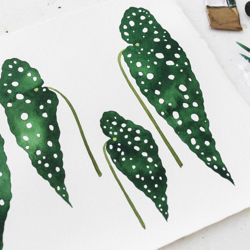 Little finished watercolor leaves of my favorite, the Polka Dot Begonia. And sad...