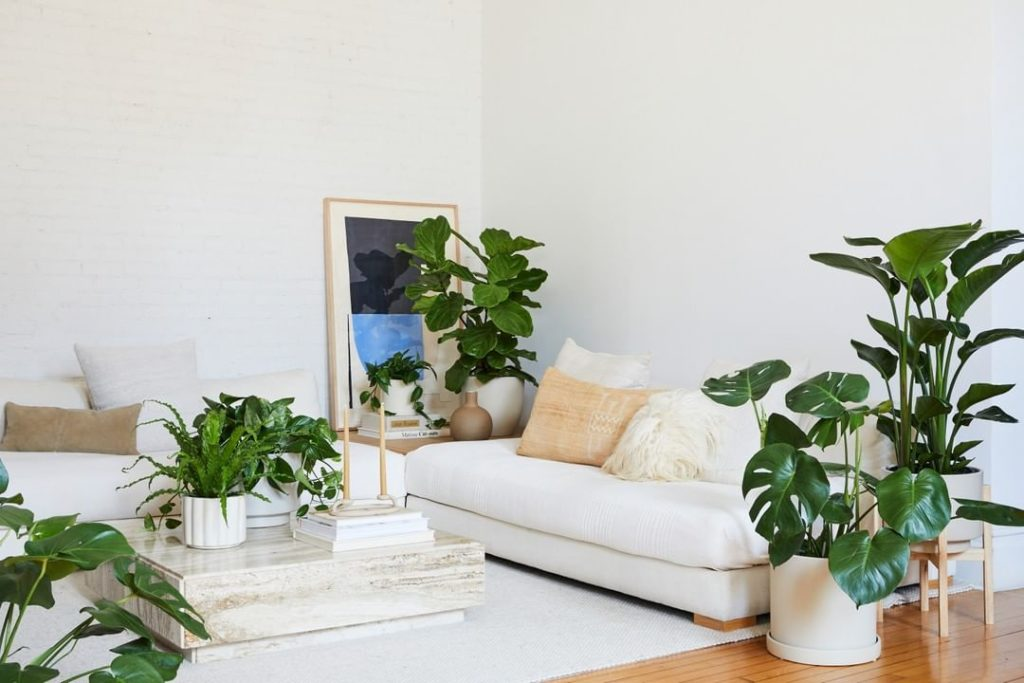If you're in NYC or LA, you can get the floor plant of your dreams delivered str...