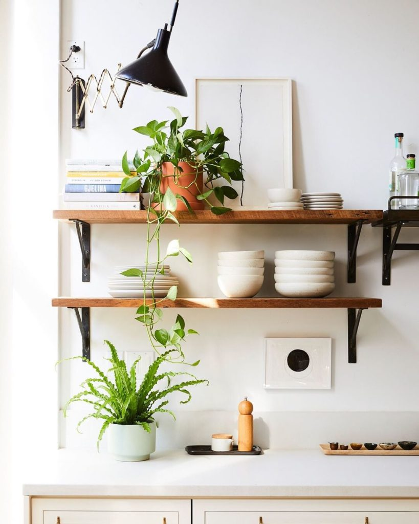 Add a bird's nest fern and brighten up your kitchen space. Keep yours in medium,...