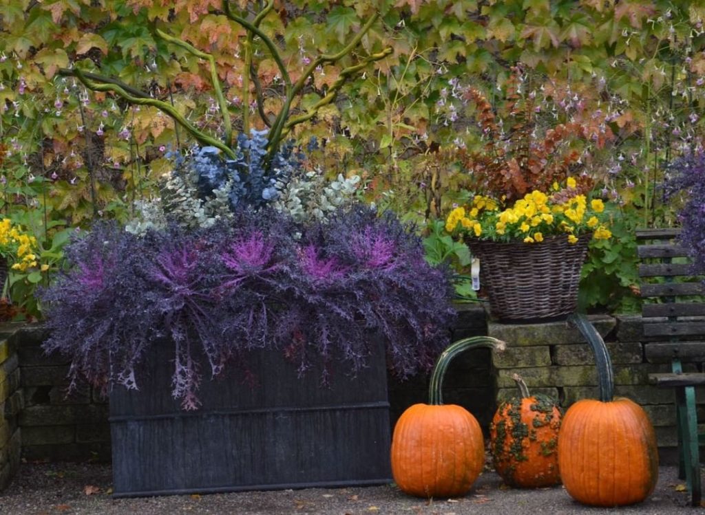 We can always count on detroitgarden for amazing seasonal containers! . . #conta...