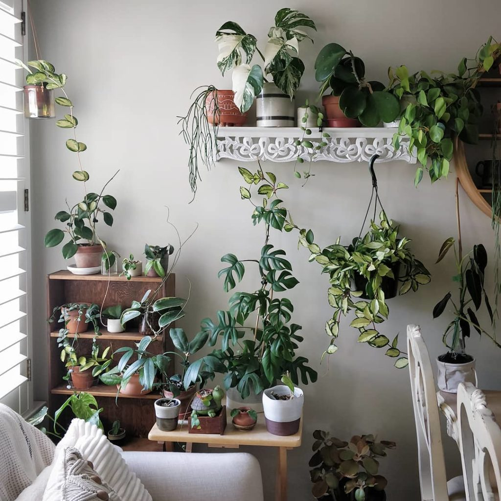 Super excited to meet you and talk houseplant care here in California! Link in p...