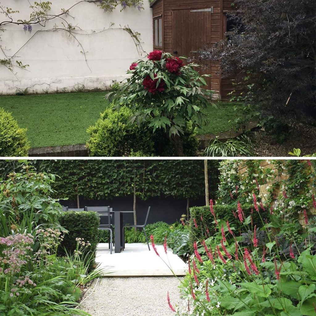 A bit of a #transformation A beautiful #treepeony looking very lonely in this #b...