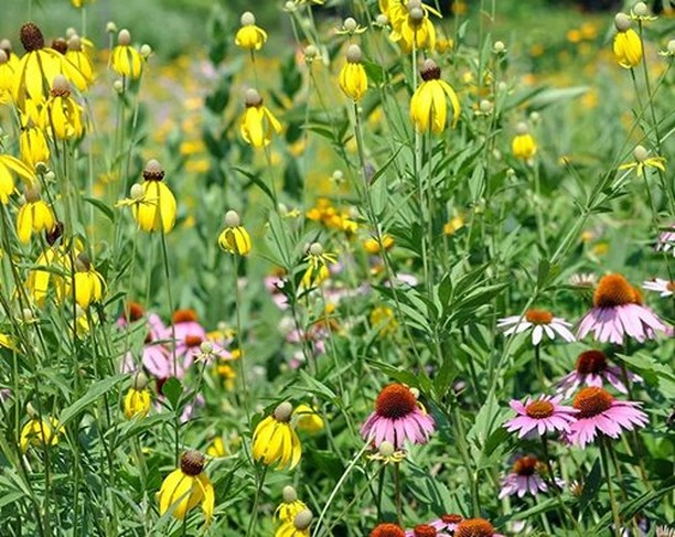Wildflowers native to the Midwest are generally best planted in fall. Will you b...