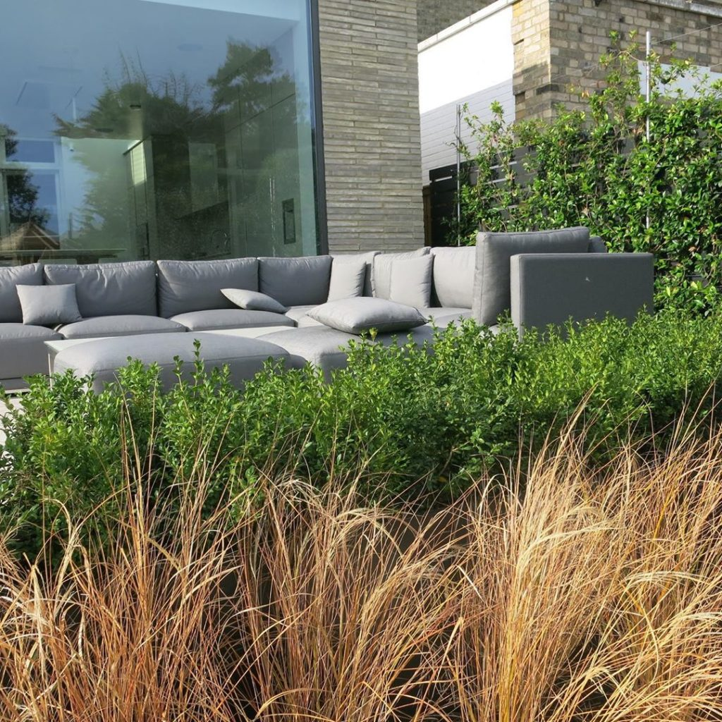 #grasses and #buxus #hedging softening the #terrace #outdoor#furniture #contempo...