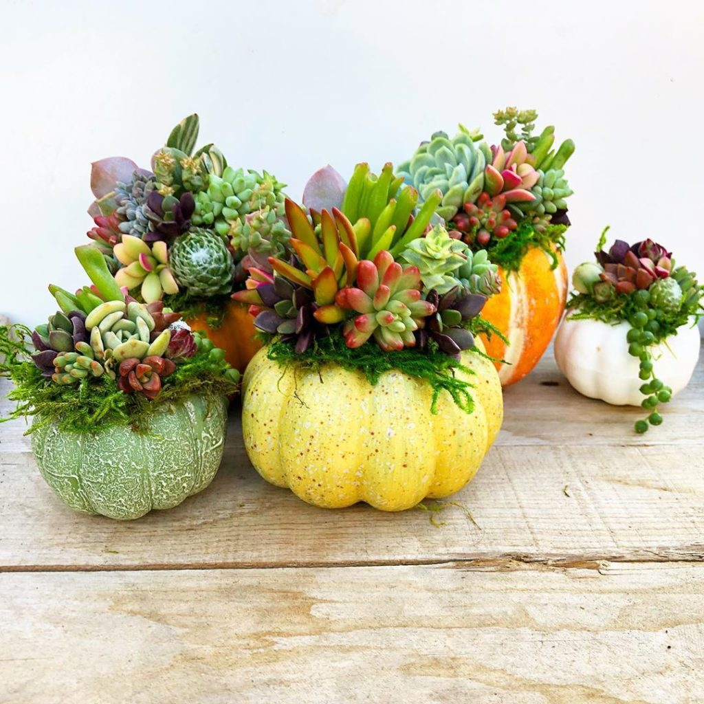 Have you stopped in and shopped our online succulent collection yet?...