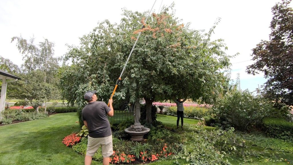 Cutting Back Hollyhocks and Pruning Our Crabapple! ✂️🌿💚// Garden Answer