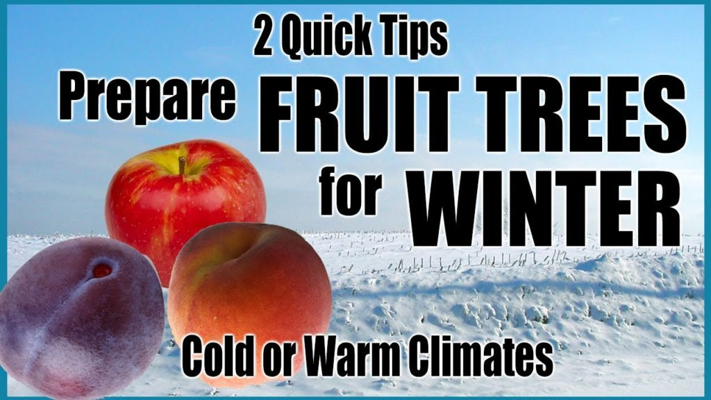 Prepare Fruit Trees for Winter in Any Climate // 2 Quick Tips