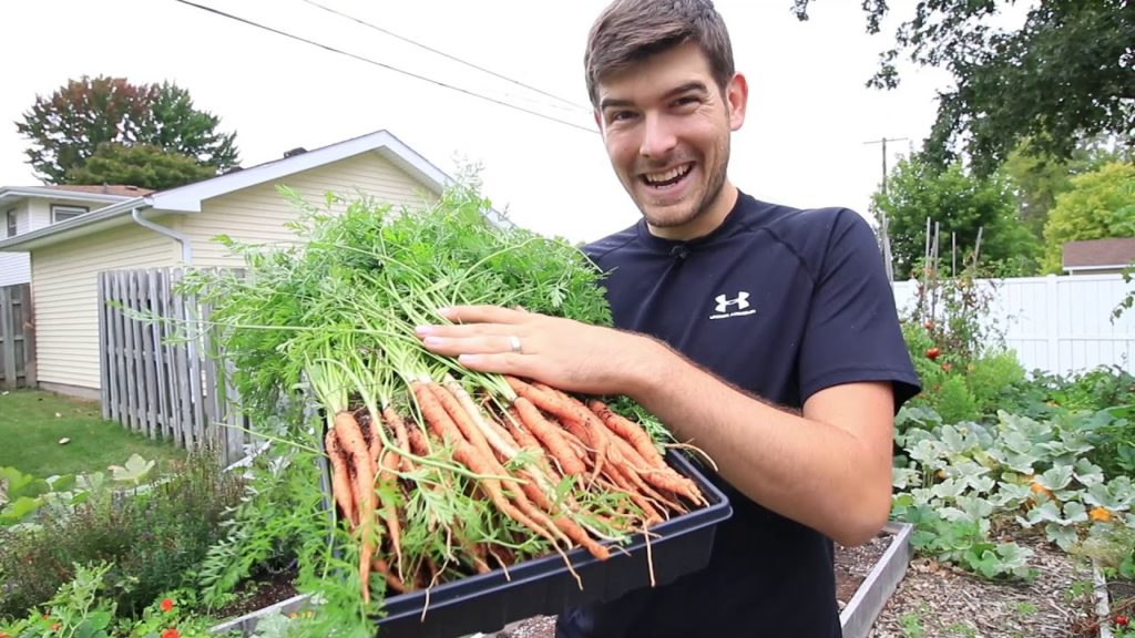 How to Get Longer Straighter Carrots