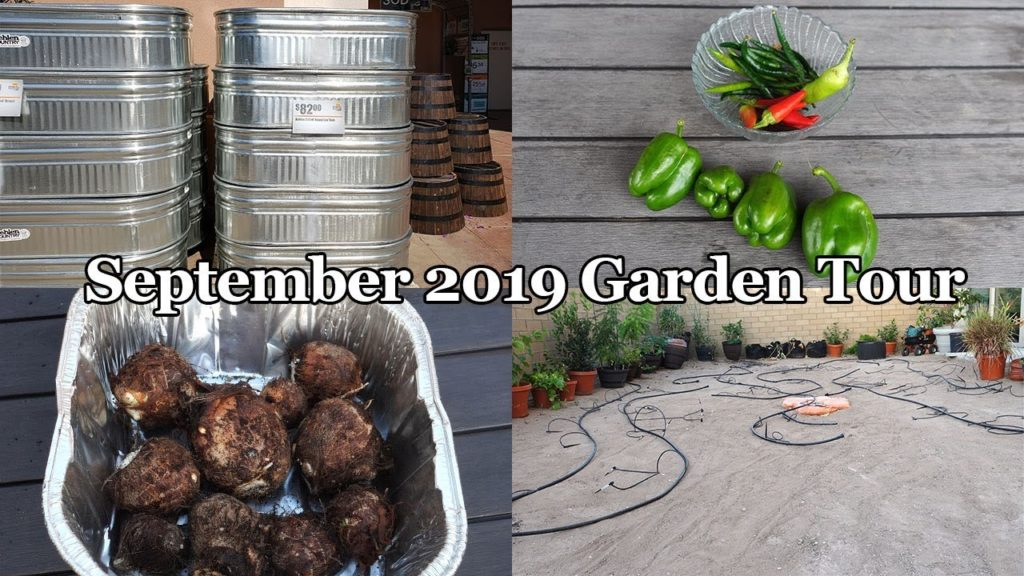 California Garden - September 2019 Garden Tour
