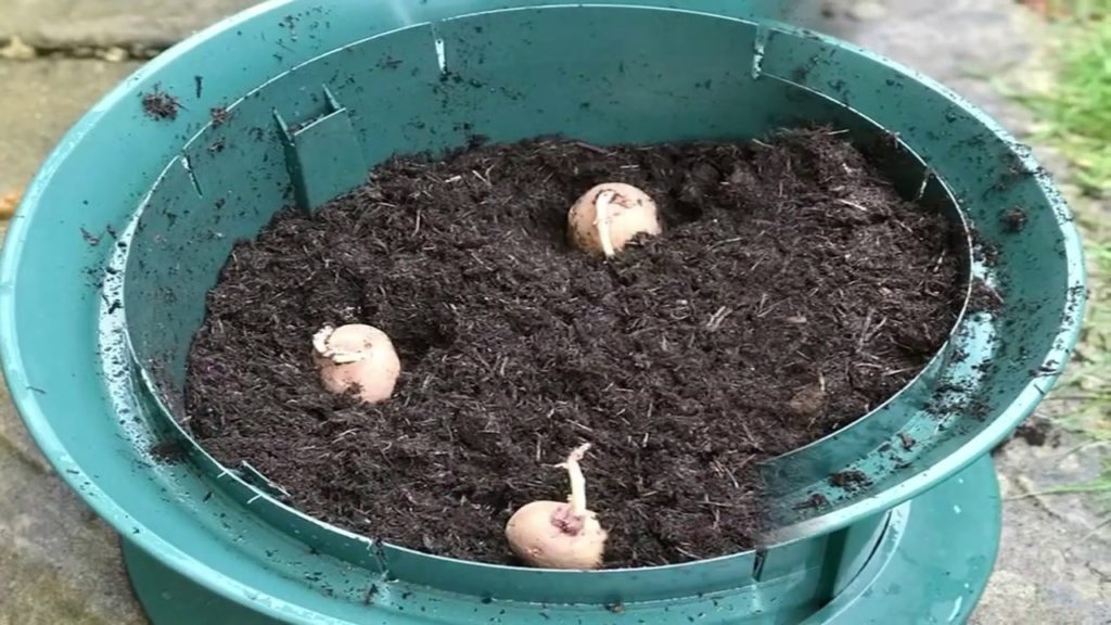13 Easiest Vegetables To Grow In Containers - Gardening Tips
