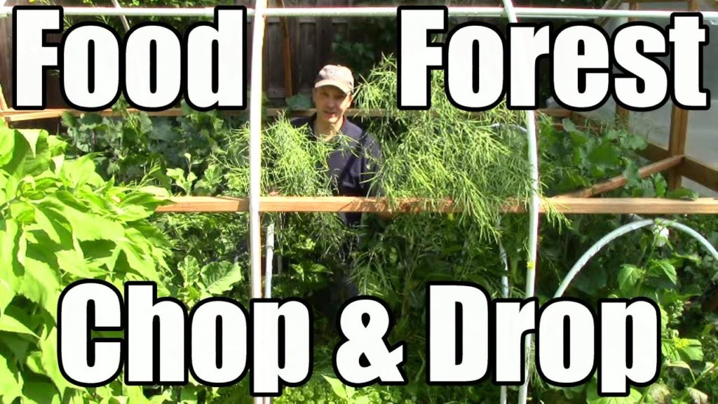 How I Prep Our Mini Food Forest of Cold Hardy Crops for Summer & Future Harvests